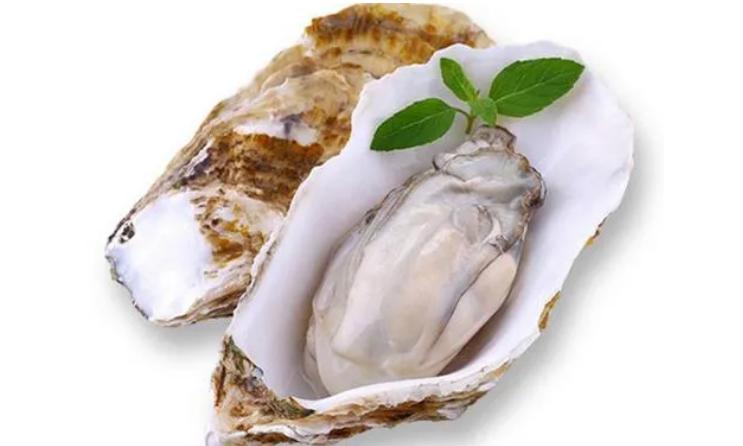 牡蛎肽的保健功能不止是补肾,常吃牡蛎肽原来有这么多的好处