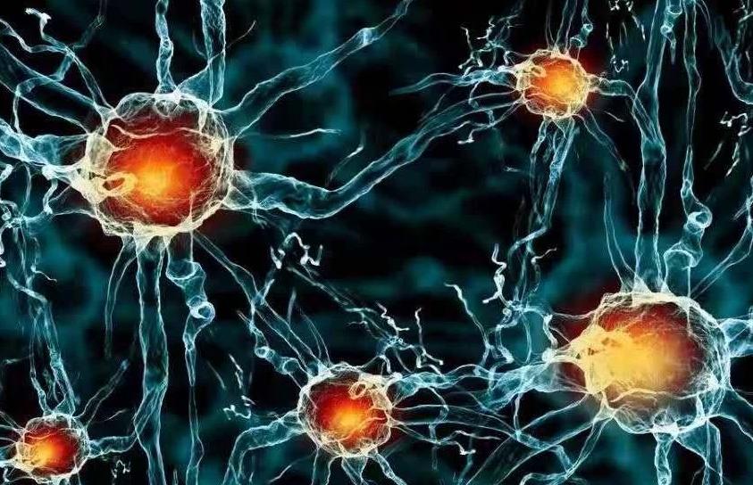 小分子肽对神经营养调节作用,肽能修复神经吗