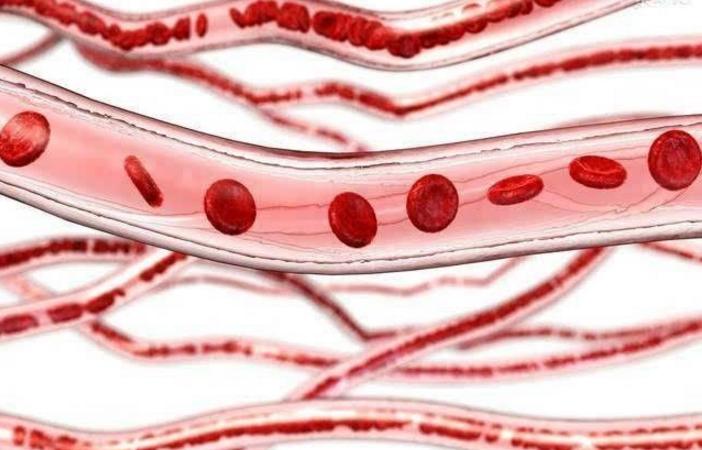 小分子肽营养血管.png