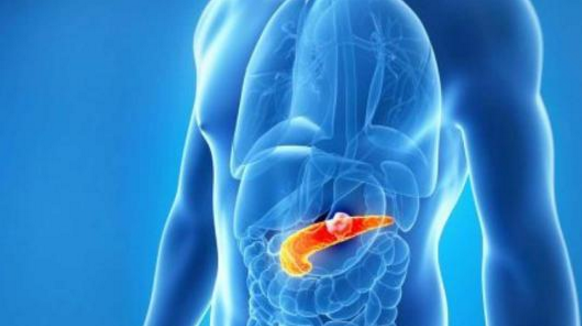 小分子活性肽对内分泌的调节作用,肽与降血脂和减肥