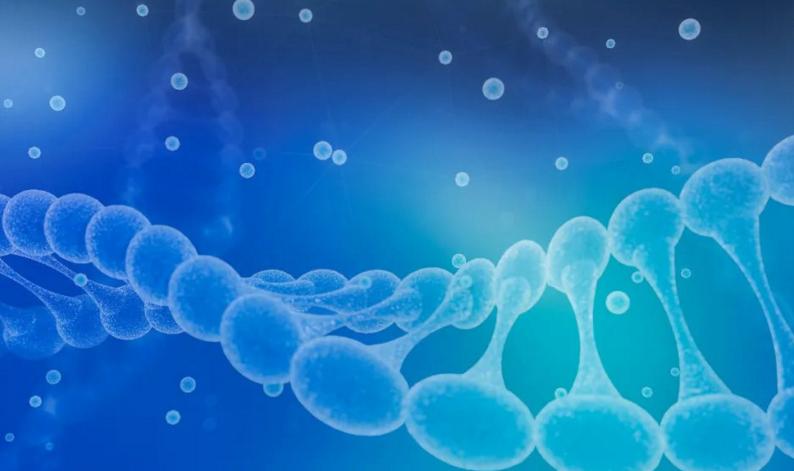 喝肽对身体有哪些作用,外源性生物活性肽的吸收特点与功效